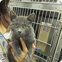 Adopt A Pet :: Amethyst - Grand Junction, CO