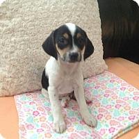 Adopt A Pet :: Raspberry - Lima, PA