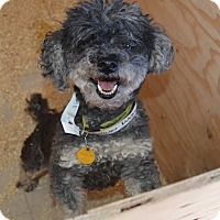 Adopt A Pet :: Stormy - Peyton, CO