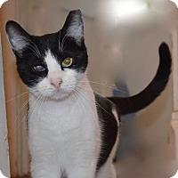 Adopt A Pet :: Eddie & Sebastian - Horsham, PA