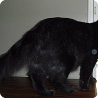 Adopt A Pet :: Buddy - brewerton, NY