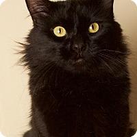 Adopt A Pet :: Danny Boy - Gilbert, AZ