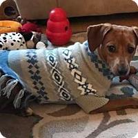 Adopt A Pet :: Justine - Boston, MA