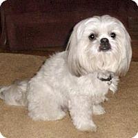Adopt A Pet :: Clyde - Mooy, AL