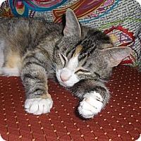 Adopt A Pet :: Zena - Richmond, VA