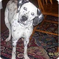 Adopt A Pet :: Nala - Chandler, IN
