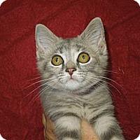 Adopt A Pet :: Paris - Medina, OH