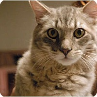 Adopt A Pet :: Smokey Joe - Lunenburg, MA