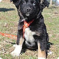 Adopt A Pet :: Charlotte York - Wytheville, VA