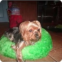 Adopt A Pet :: Rylie - Miami, FL
