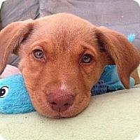 Adopt A Pet :: Cash - Knoxville, TN