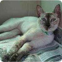 Adopt A Pet :: Roxanne - Lunenburg, MA