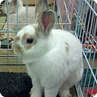 Adopt A Pet :: Zeus - Williston, FL