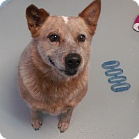 Adopt A Pet :: Rusty - Muskegon, MI
