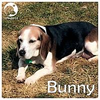 Adopt A Pet :: Bunny - Novi, MI