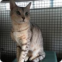 Adopt A Pet :: ERIKA - Brea, CA
