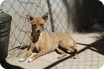 Furgotten Friends Dog Rescue Pahrump Nv