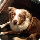 Adopt A Pet :: Kevlar (COURTESY POST)