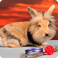Adopt A Pet :: Cecil - Marietta, GA