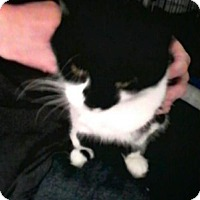 Adopt A Pet :: Maggs - Trevose, PA