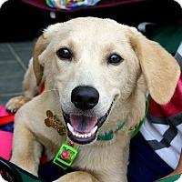 Adopt A Pet :: Lilly - Richmond, VA