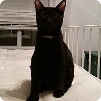 Adopt A Pet :: Millie TG - Schertz, TX