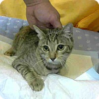 Adopt A Pet :: URGENT on 2/2 at DEVORE - San Bernardino, CA