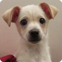 Adopt A Pet :: Augustus! - St Petersburg, FL