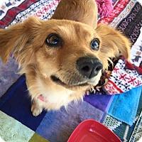 Adopt A Pet :: Spin - La Quinta, CA