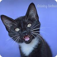 Adopt A Pet :: Mara - Millersville, MD