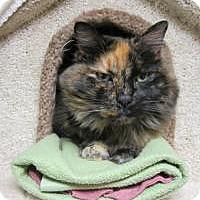 Adopt A Pet :: Catrina - Quilcene, WA
