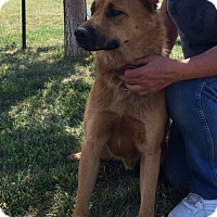 Adopt A Pet :: Marley - Buffalo, WY
