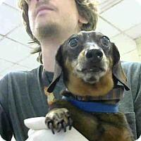 Adopt A Pet :: A278655 - Conroe, TX