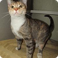 Adopt A Pet :: Suzie - Cheboygan, MI