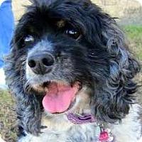 Adopt A Pet :: Lola - Austin, TX