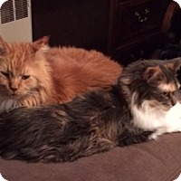 Adopt A Pet :: Lucy and Wally - Courtesy Post - Ashland, MA
