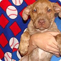 Adopt A Pet :: Valentino - Oviedo, FL