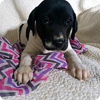 Adopt A Pet :: Carmen (MD-Kelly) - Newark, DE