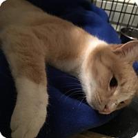 Adopt A Pet :: Ziggy - Columbia, SC