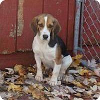 Adopt A Pet :: Cruiser - Transfer, PA