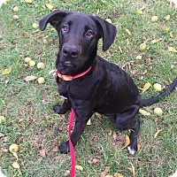 Adopt A Pet :: Candy - Poughkeepsie, NY