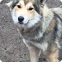 Adopt A Pet :: Charlotte - McKinney, TX