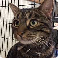 Adopt A Pet :: Ollie - Middletown, NY
