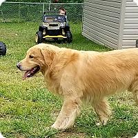 Adopt A Pet :: Ranger - Pacific, MO