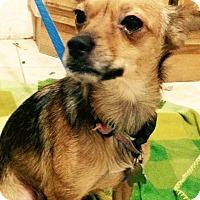 Adopt A Pet :: Scarlett - Santa Ana, CA