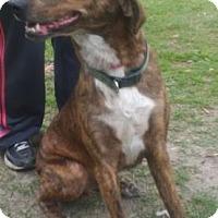 Adopt A Pet :: Bovie - Ridgeland, SC