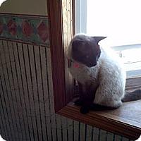 Adopt A Pet :: Hudson - Saint Albans, WV