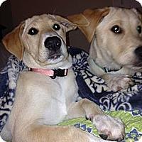 Adopt A Pet :: Nikki~Ridgefield, CT - Adamsville, TN