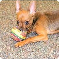 Adopt A Pet :: Chester - Arlington, TX