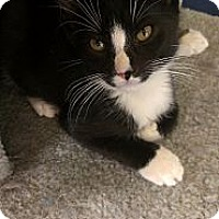 Adopt A Pet :: Benjamin Franklin - Richboro, PA